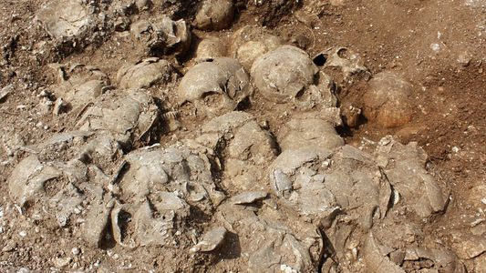 51 Headless Vikings in English Execution Pit Confirmed