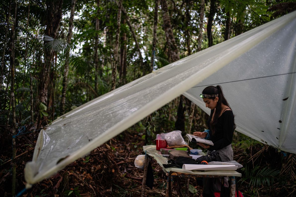 Ornithologist Maria Isabel Castaño works at a makeshift bird station in the middle of the forest.
