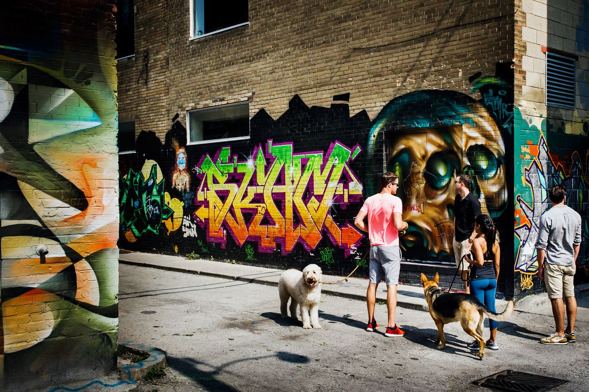 Stroll down the alleys leading off Queen Street for the densest collection of colourful murals.