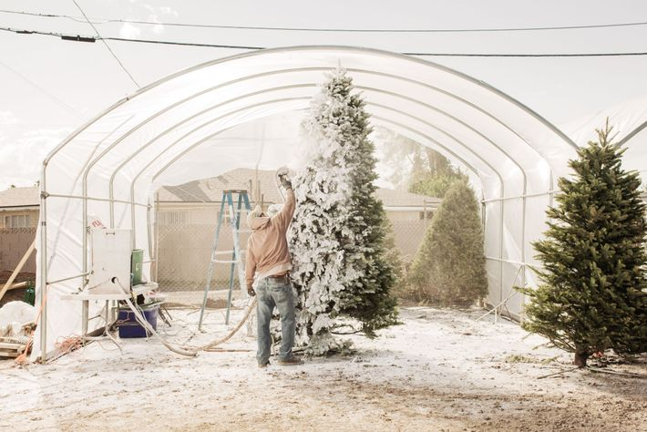 """A Pacific Furs Tree Lot employee """"flocks"""" a Christmas tree in Glendale, Arizona in 2011. Flocking ..."""