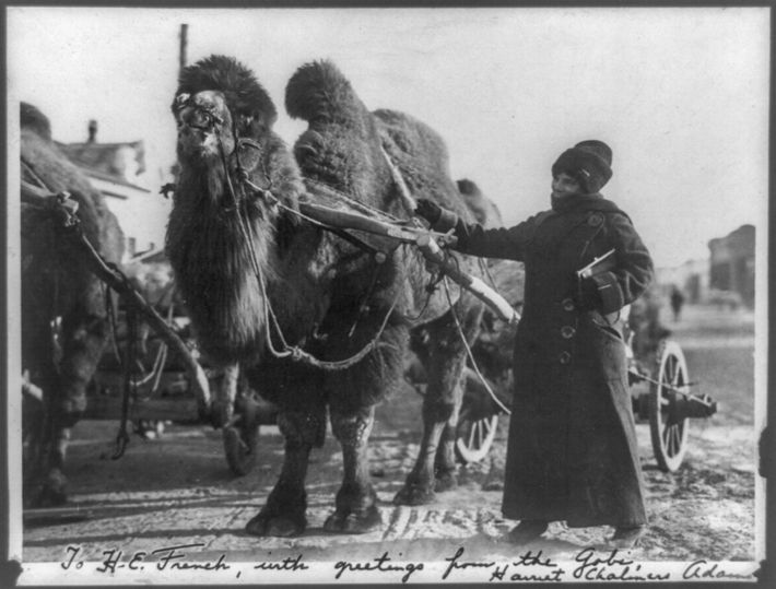 On one of her extensive trips, Adams inscribed her photograph of a camel pulling a cart: ...