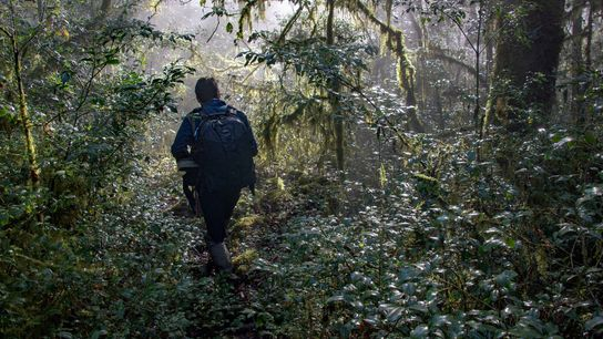 Conservationist and photographer Roberto Pedraza walks through the cloud forest in Sierra Gorda Biosphere Reserve in ...