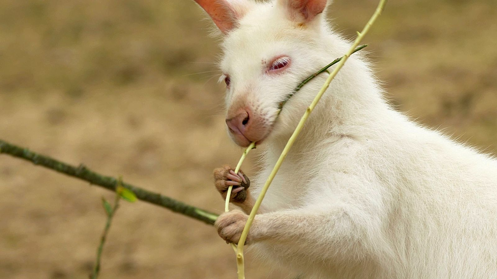 Surprising Snow-White Animals of Your Winter Dreams