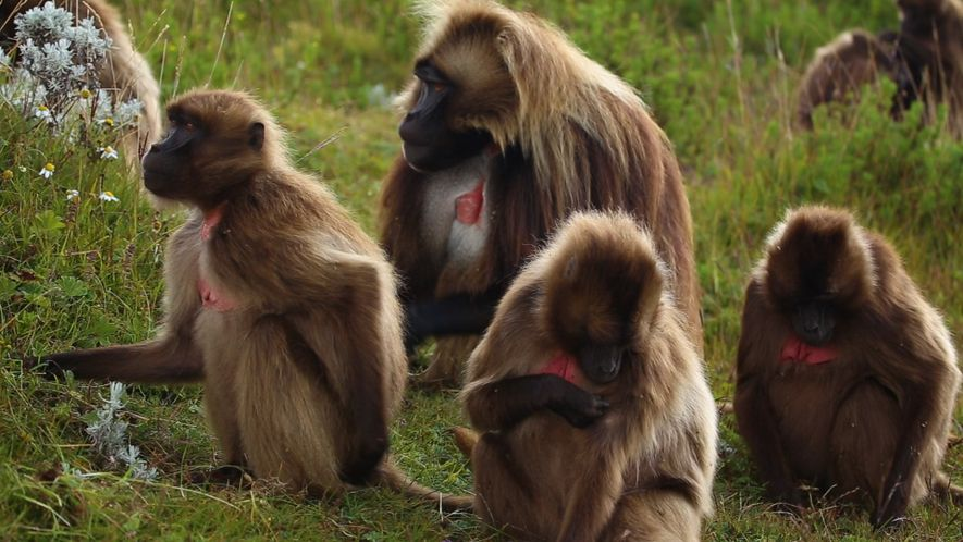 Watch a Gorgeous Time-Lapse Film of Monkeys in the Ethiopian Highlands