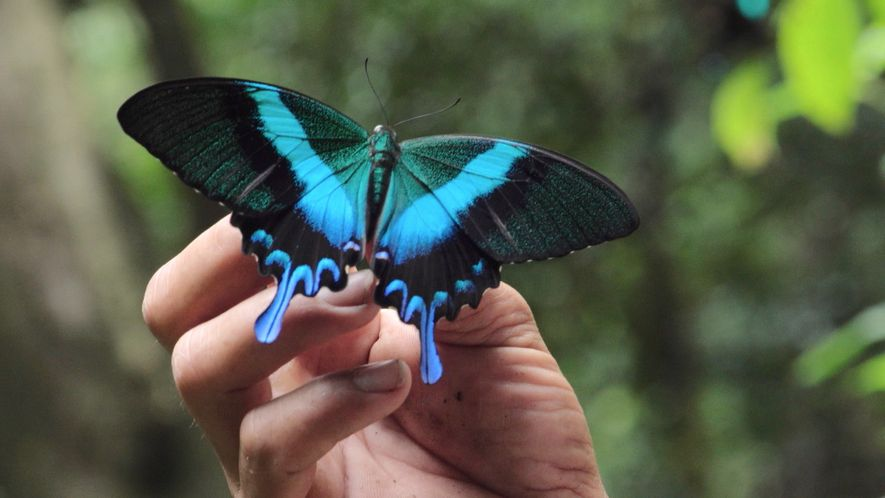Inside the Lives of Butterfly Traders