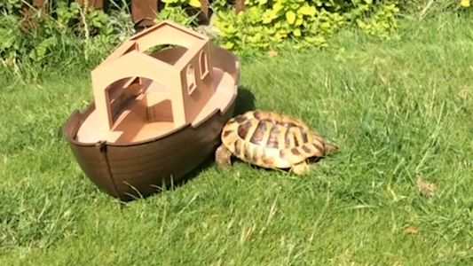 Watch This Tortoise Attack Everything in Sight