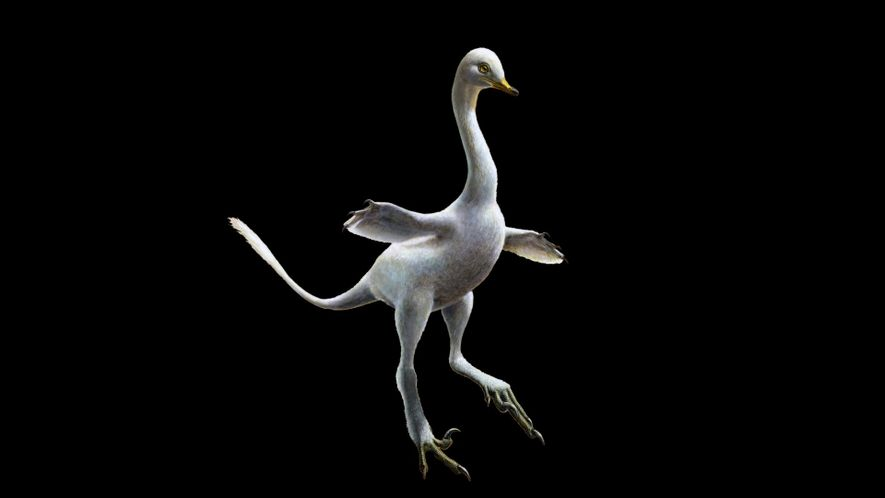 Watch: Duck-Like Dinosaur is Among Oddest Fossils Ever Found