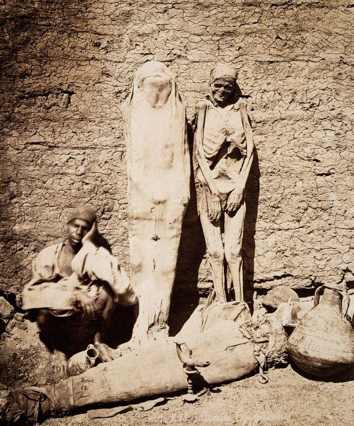 Mummies Market