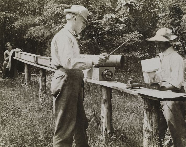 """David Fairchild used his 12-foot-long (3.7-metre) camera, nicknamed """"Long Tom,"""" to capture enlarged images of insects ..."""