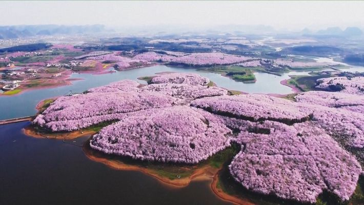 Cherry Blossoms and Other Beautiful Flowers Usher in Spring in China