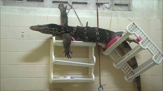 Big Lizard Invades Man's Bathroom