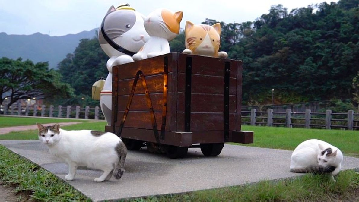 Look Inside Taiwan's 'Cat Village'