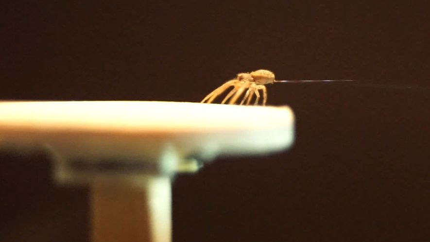 Spiders Spin Balloons to Fly Away