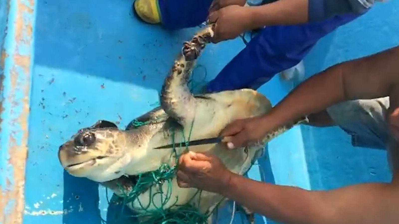 Sea Turtle Rescued From Abandoned 'Ghost Net' Snare