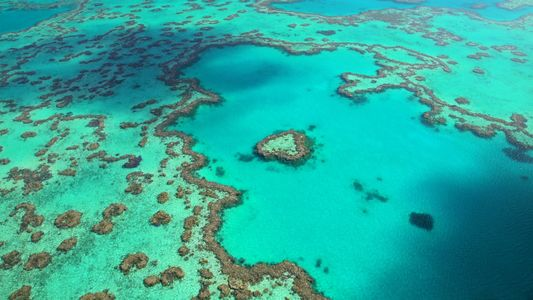 Experience the Splendour of Australia's Great Barrier Reef