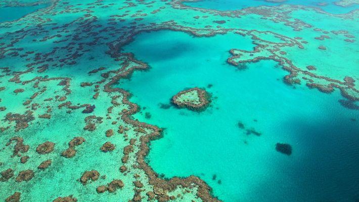 Experience the Splendor of Australia's Great Barrier Reef