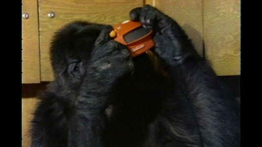 Watch Koko the Gorilla Use Sign Language in This 1981 Film