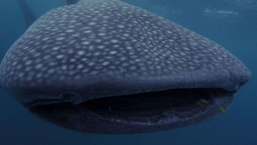 5 Big Sharks That Rule the Sea