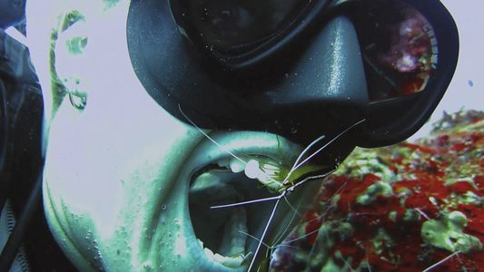 Watch: Should You Let Shrimp Clean Your Teeth?