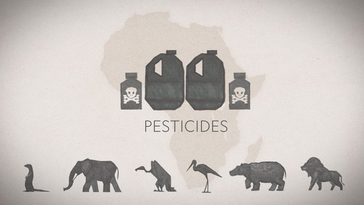 How Pesticide Misuse Is Killing Africa's Wildlife