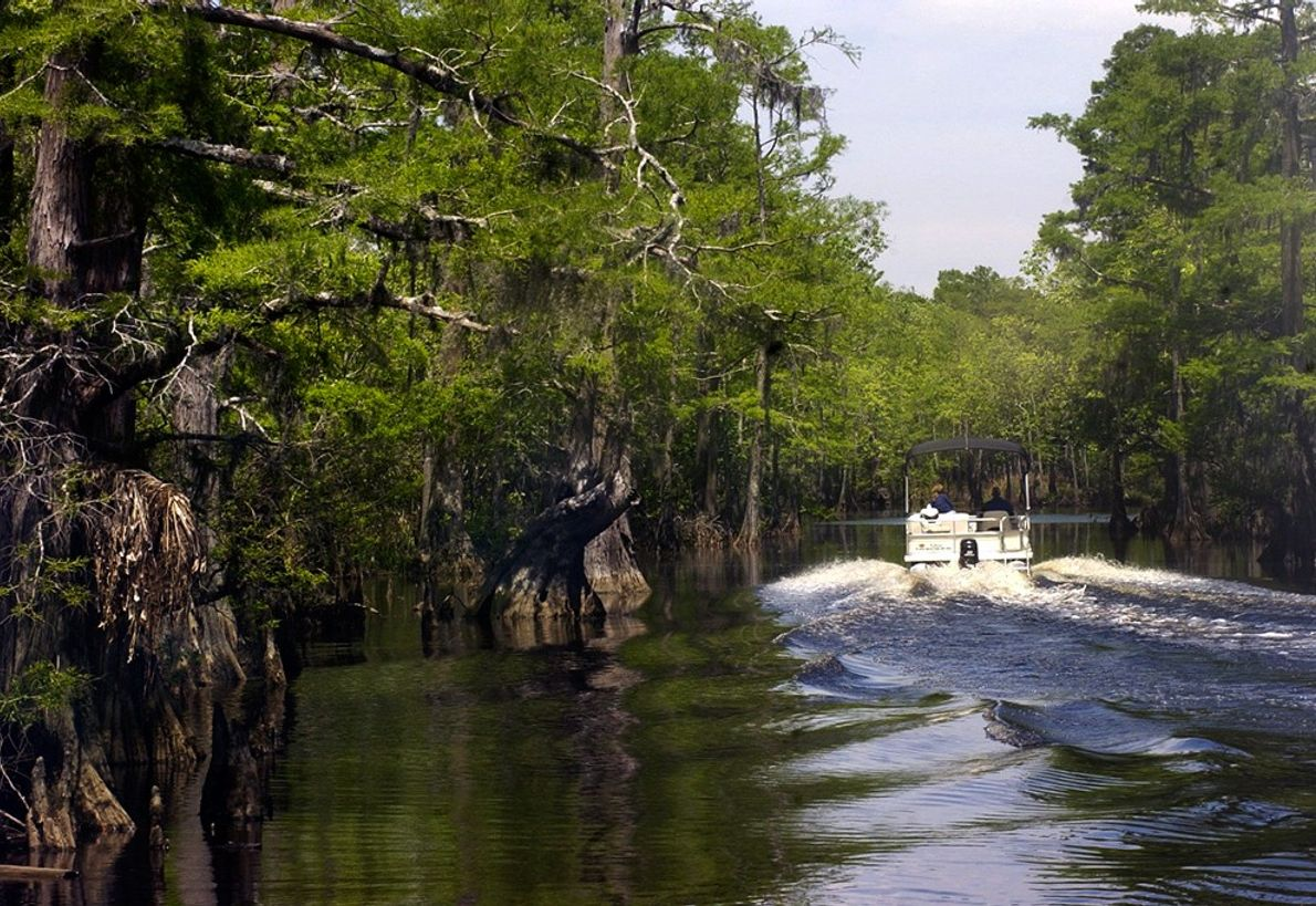 Big Thicket in eastern Texas is home to carnivorous plants, cypress forest, and a host of ...