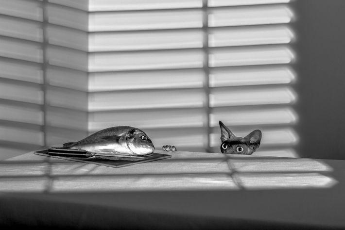 "Your Shot photographer Julia Wimmerlin's spynx cat ""hunts"" a fish."