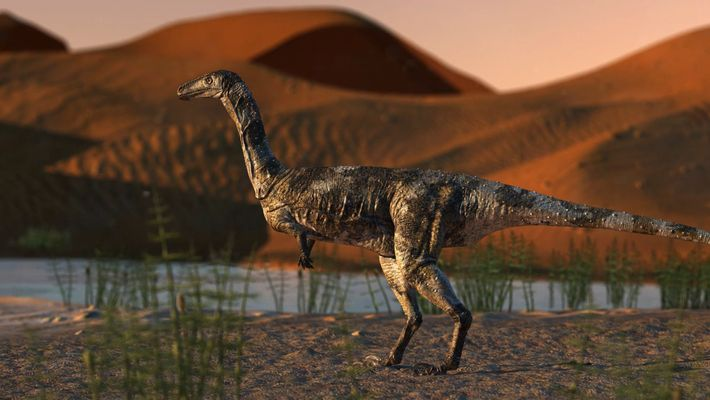 Newly discovered dinosaur foot is best-preserved theropod fossil in Brazil