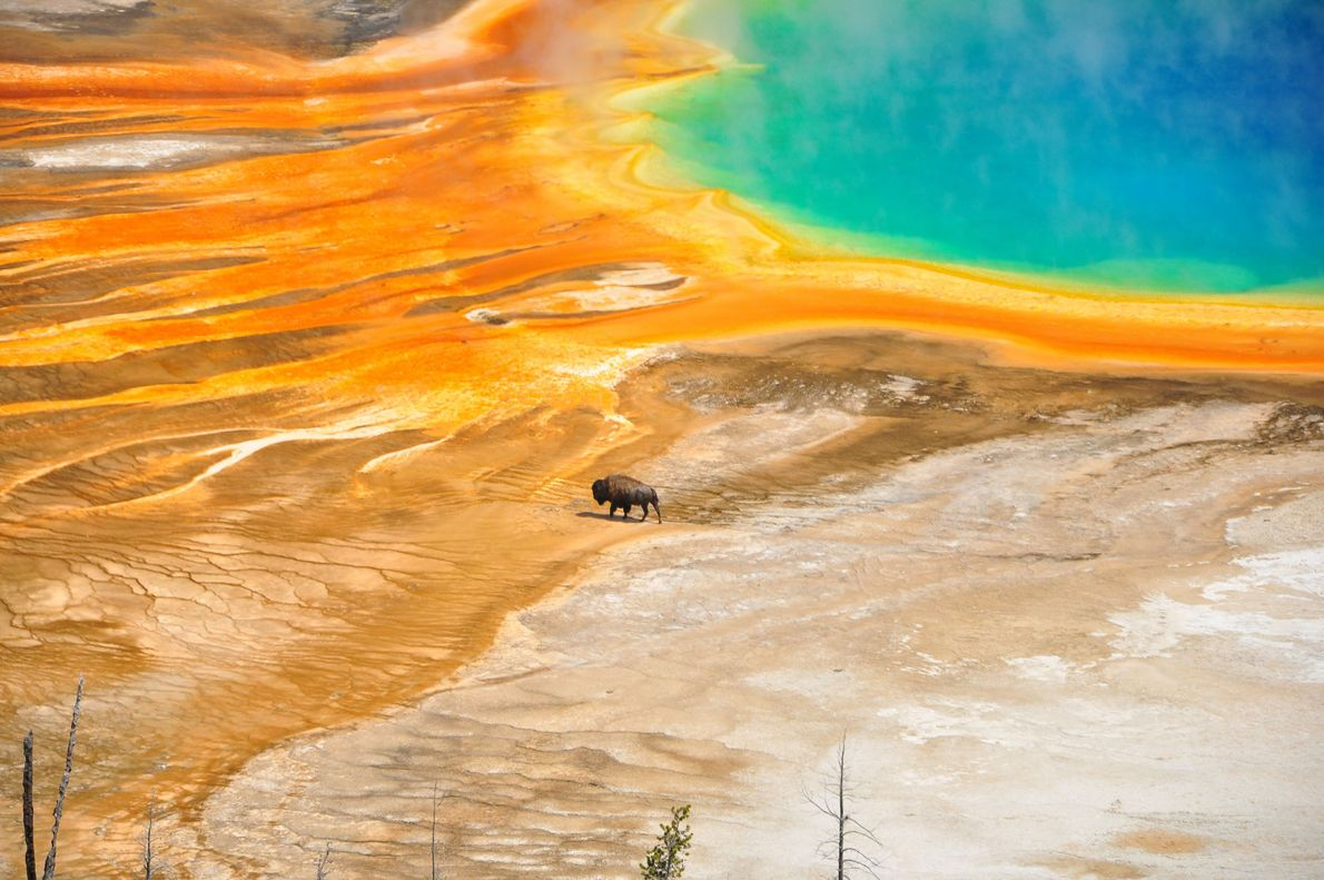"""""""While photographing the Grand Prismatic Spring at Yellowstone National Park from a hill across the spring,"""" ..."""