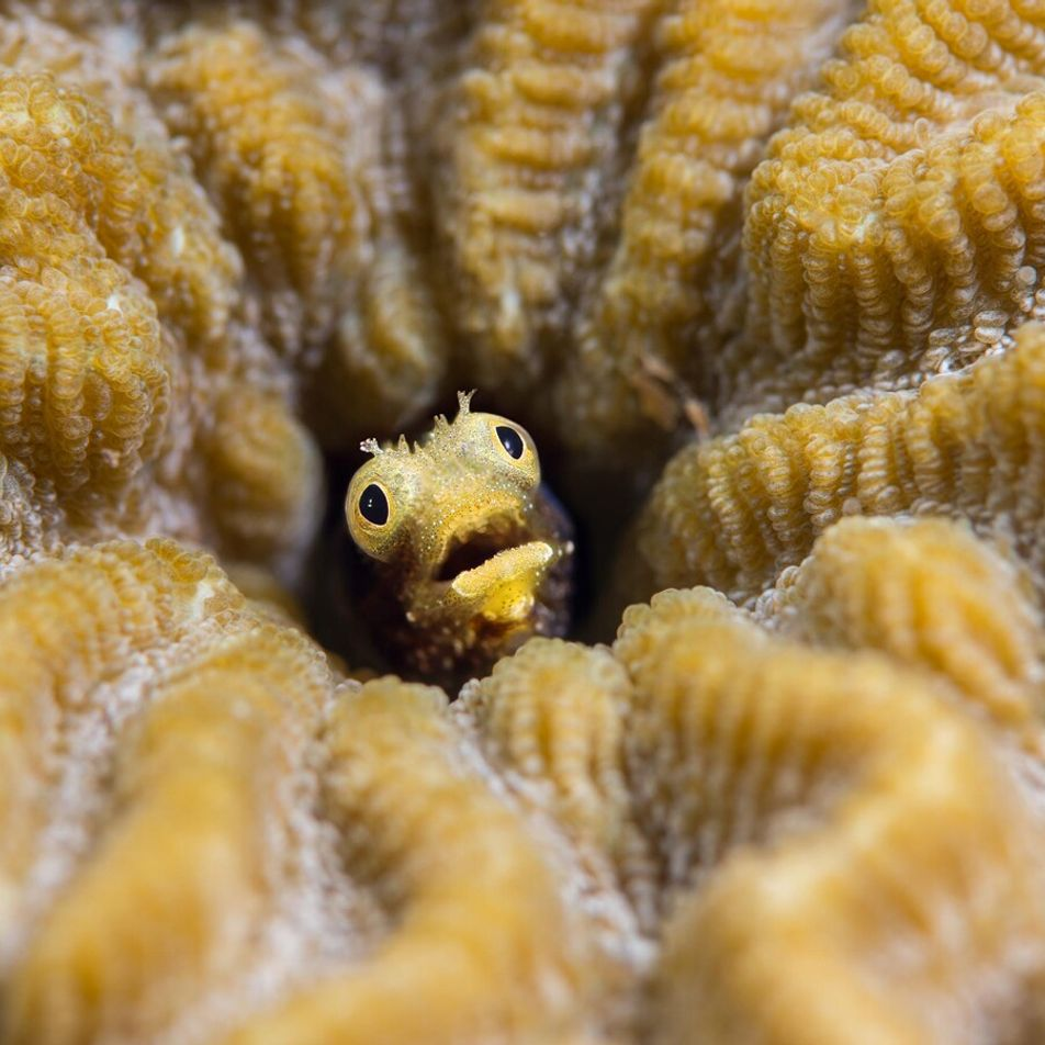 46 astonishing wildlife images capture beauty, peril and hope