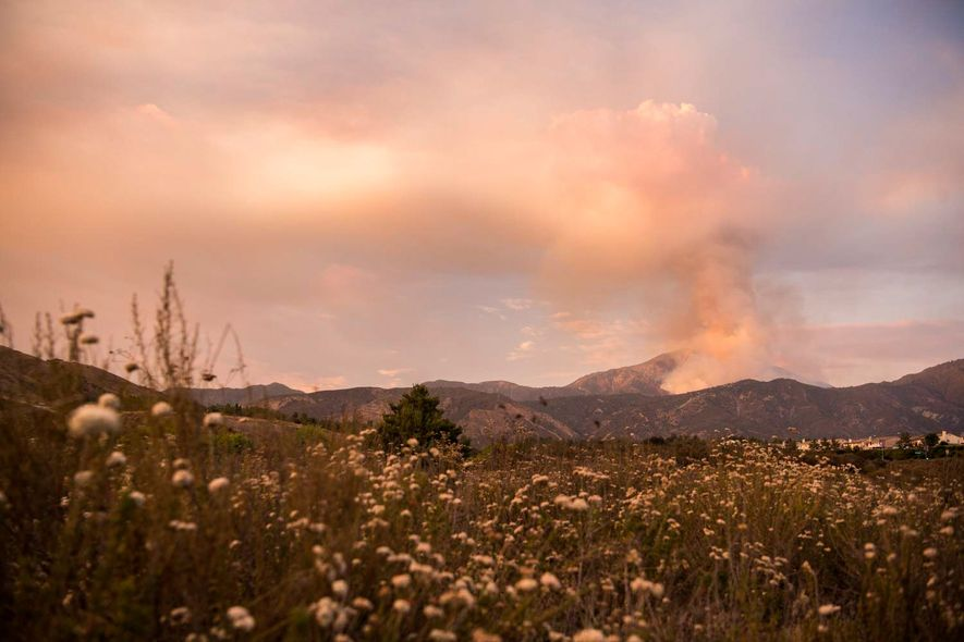 The Valley Fire burns near Forest Falls and Highway 38 in the San Bernardino National Foret.