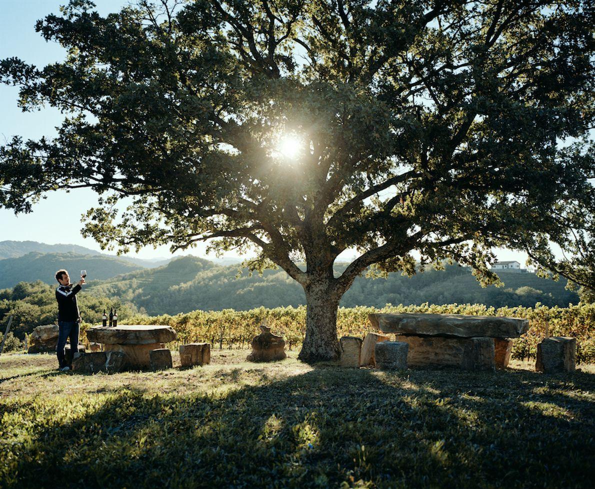 This Vineyard in Goriška Brda is home to the Erzetič family of winemakers. A few years ...