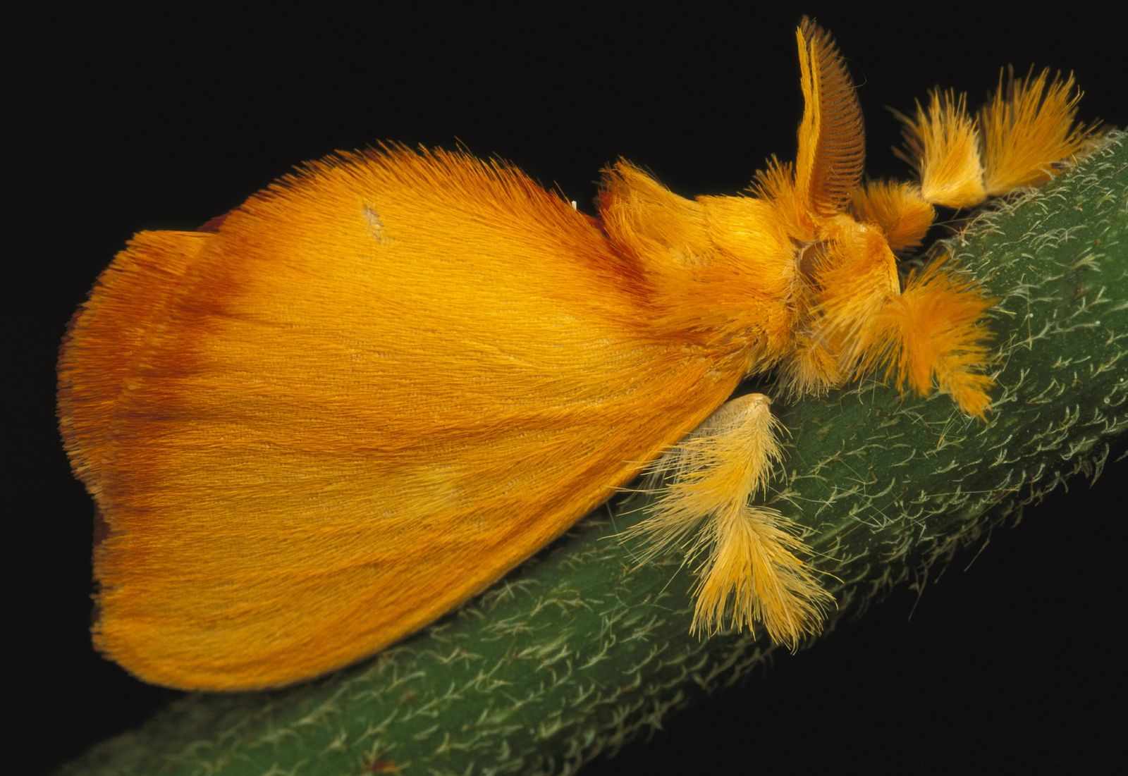 Marvellous moths - in pictures