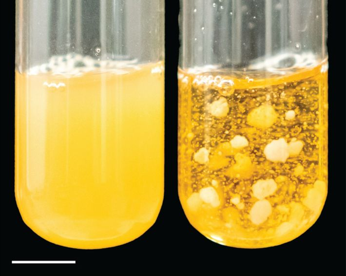 Yeast Before and After