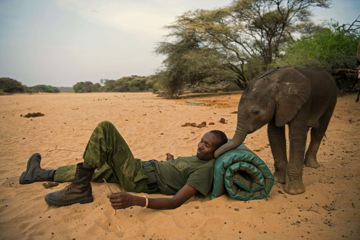 An animal keeper and a rescued orphan elephant share a moment at the Reteti Elephant Sanctuary ...