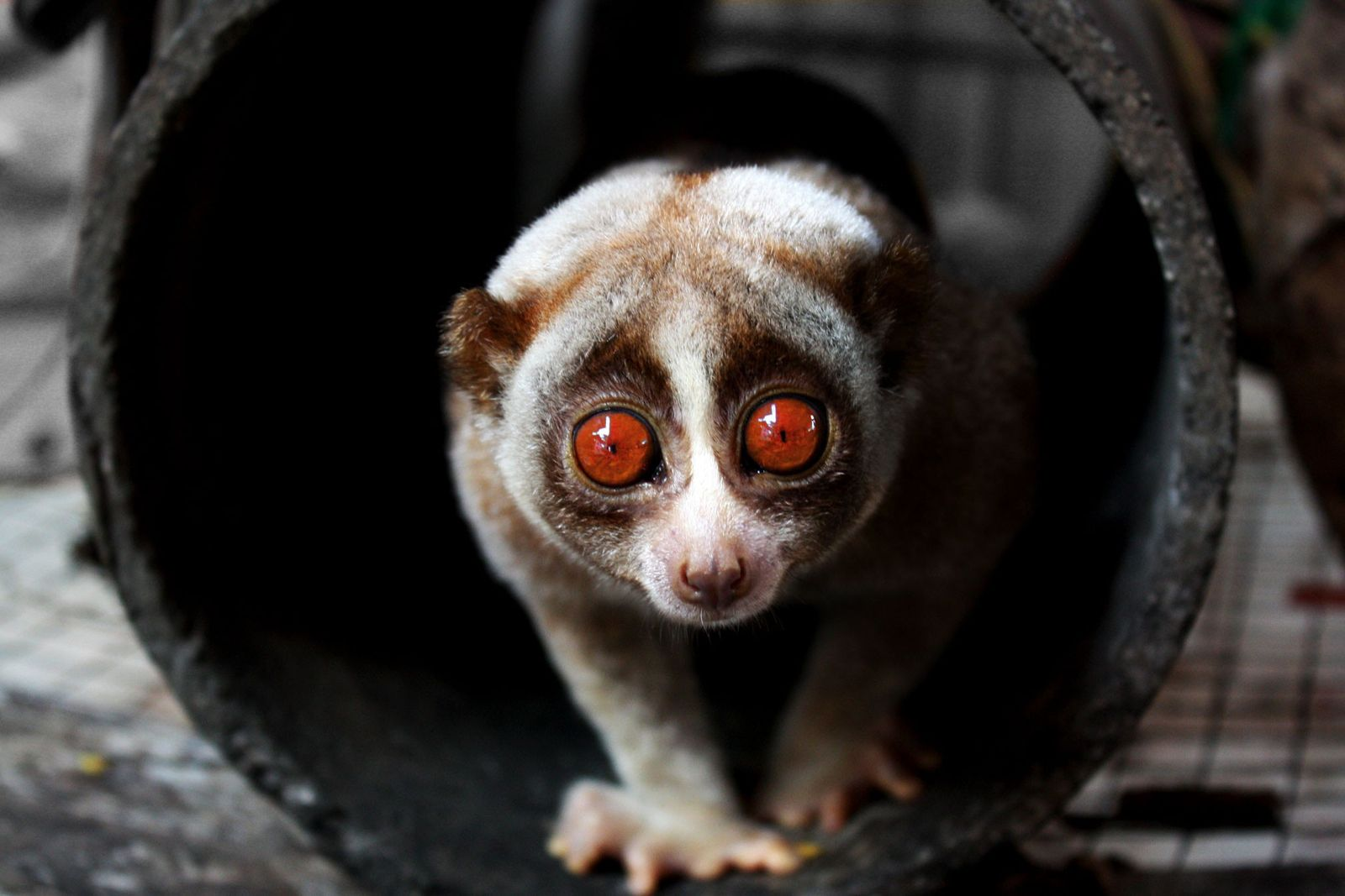 World's slowest animals prove speed isn't everything