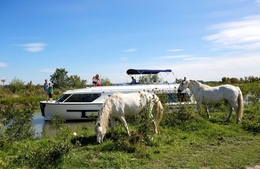 While on a boating trip around the wild wetlands the Camargue, travellers can look out for ...