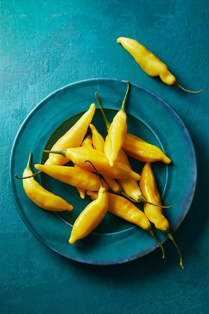 Limo chilli is a fiery Peruvian variety, often used in ceviche, that has a citrussy flavour ...