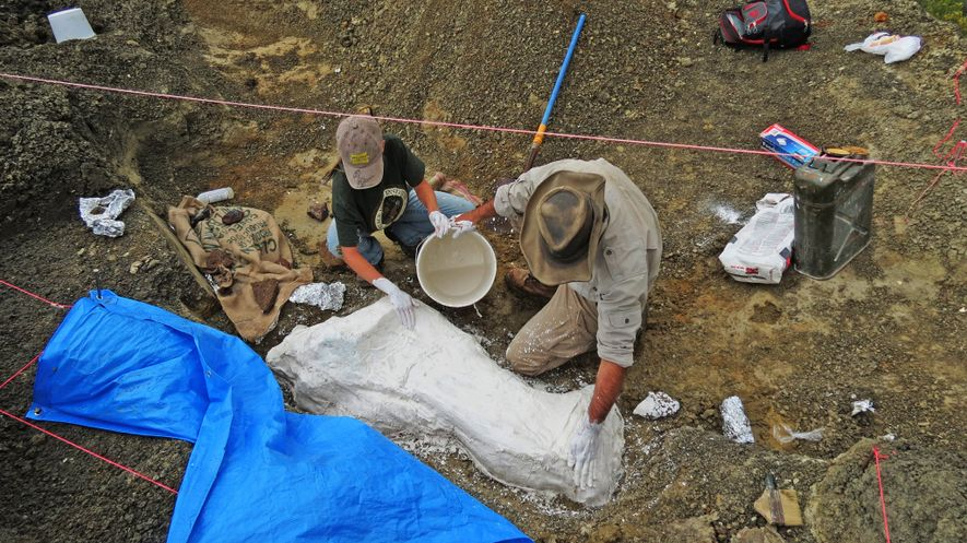 Study leader Robert DePalma (right) and field assistant Kylie Ruble stabilize a fossil slab with plaster ...