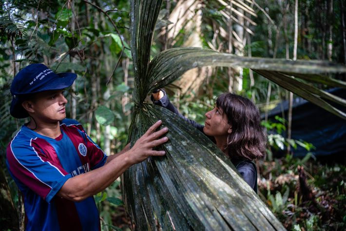 Obed Quiroz (left) and Lina Bolivar (right), part of the botany team, said these leaves resemble ...