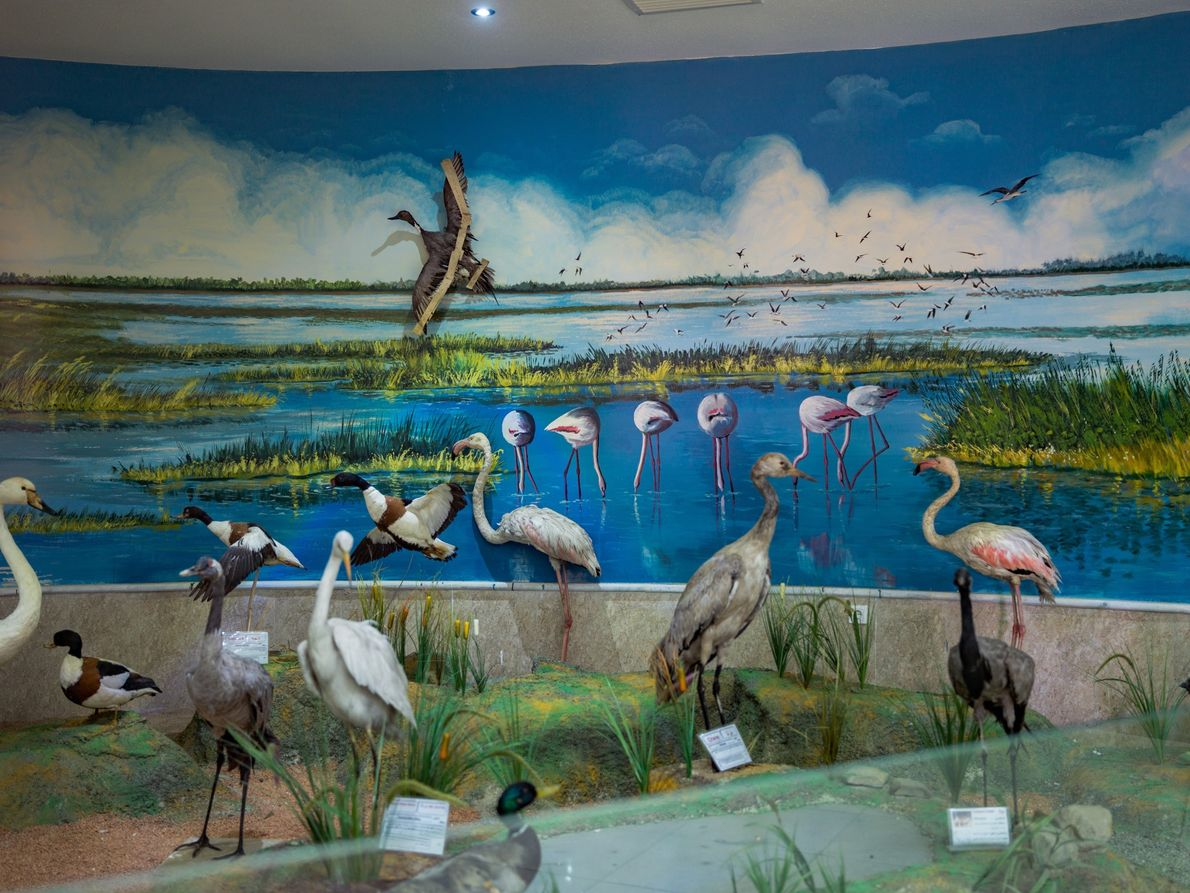 Taxidermied birds at the Natural History Museum of Urmia.