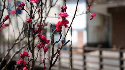Hiking Japan's sacred Kumano Kodo pilgrimage route