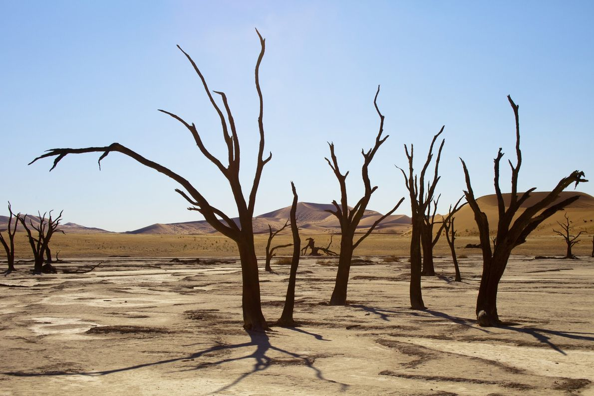 Namibia's Dead Valley, or Deadvlei, has a stark beauty filled with dead acacia trees and some ...