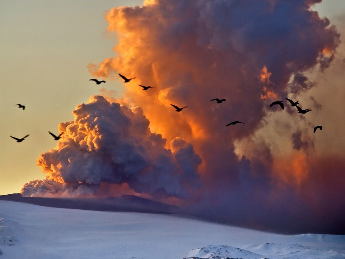 Geese fly past the ash cloud from the eruption of the Eyjafjallajökull  volcano that began ...