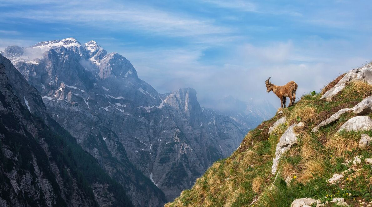 The Julian Alps in Slovenia provided a striking setting for Ales Krivec's photo of an Alpine ...