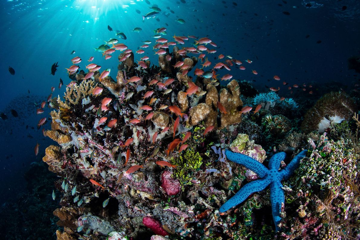 Colorful fish swim above a healthy reef in the Lesser Sundra Islands, Indonesia.