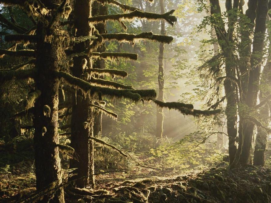 Rainforests, explained