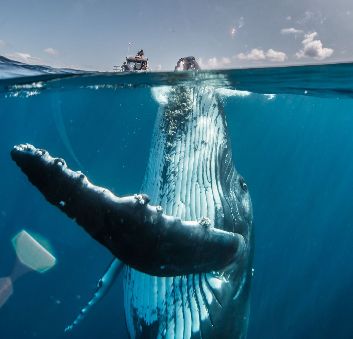 """""""I took this photo of an adolescent humpback whale in the South Pacific, several miles off ..."""