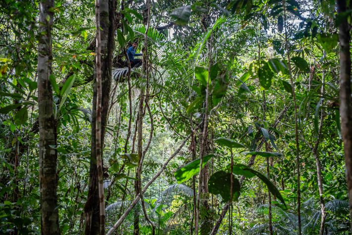A team scientist looks for wildlife in the canopy.