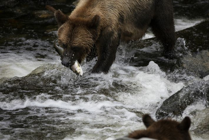 Book a once-in-a-lifetime wildlife viewing trip from Campbell River on Vancouver Island, with a stay at ...