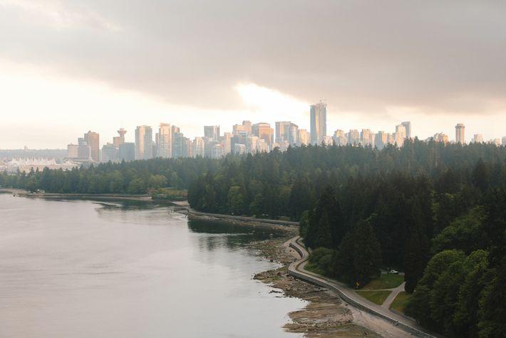 Vancouver's towering Douglas-fir treesstanding proud againstthe city'sgleaming skyscrapers.